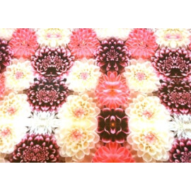 Опаковъчна хартия хризантеми